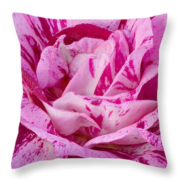 Throw Pillow featuring the photograph Winter Rose  by Heidi Smith