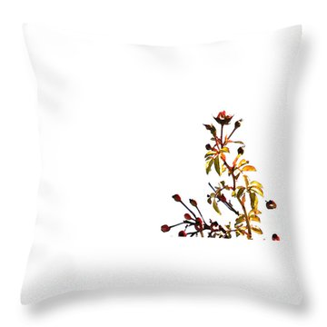 Throw Pillow featuring the photograph Winter Rose by Linda Shafer