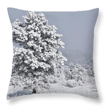 Throw Pillow featuring the photograph Winter Solitude by Diane Alexander