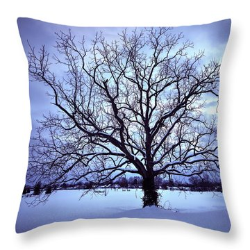 Throw Pillow featuring the photograph Winter Twilight Tree by Jaki Miller