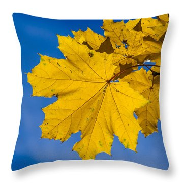 Winter Warmer Throw Pillow by Alexander Senin