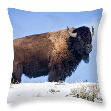 Throw Pillow featuring the photograph Winter Warrior by Jack Bell