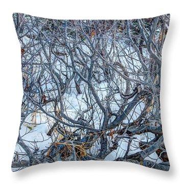 Winter Willow Throw Pillow by Jan Davies