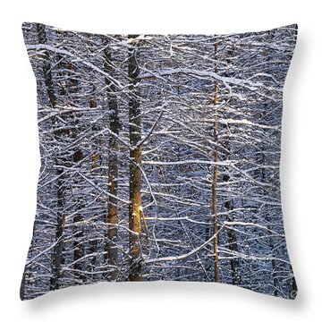 Throw Pillow featuring the photograph Winter Woods by Alan L Graham