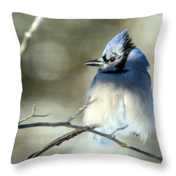 Winter's Jay Throw Pillow