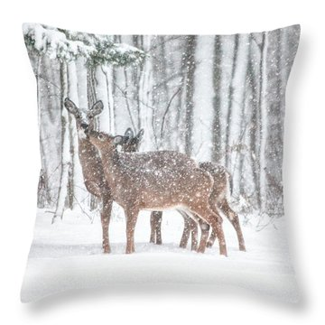Winters Love Throw Pillow