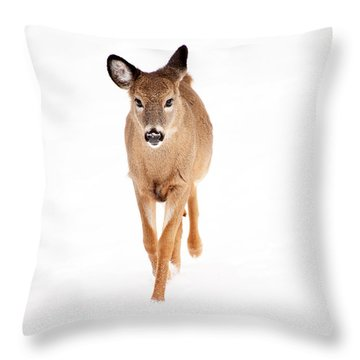 Winters Young Throw Pillow by Karol Livote