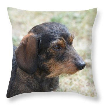 Wire Haired Daschund Throw Pillow
