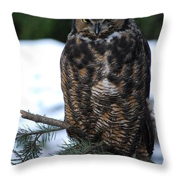 Throw Pillow featuring the photograph Wise Old Owl by Sharon Elliott
