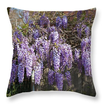 Wisteria Flowers In Bloom, Sonoma Throw Pillow