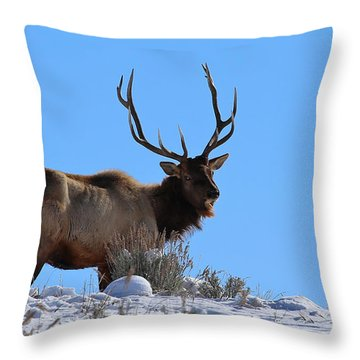 With Age Comes Wisdom Throw Pillow by Marty Fancy