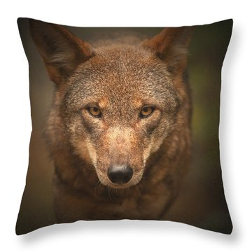 Wolf Stare Throw Pillow by Karol Livote