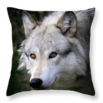 Wolf Stare Throw Pillow by Steve McKinzie