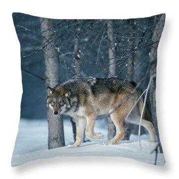 Wolf Winter Throw Pillow