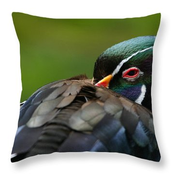 Wood Duck Upclose Throw Pillow by Karol Livote
