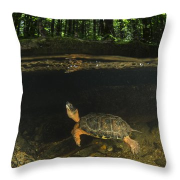 Wood Turtle Swimming North America Throw Pillow