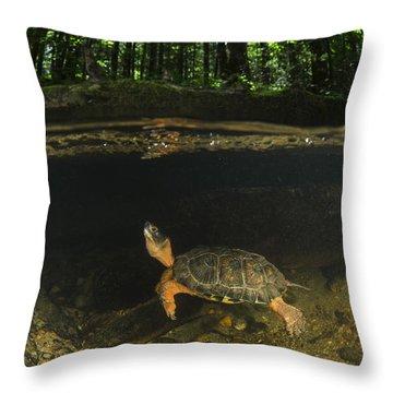 Glyptemys Insculpta Throw Pillows