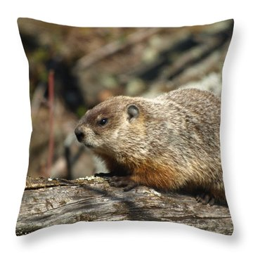 Throw Pillow featuring the photograph Woodchuck by James Peterson