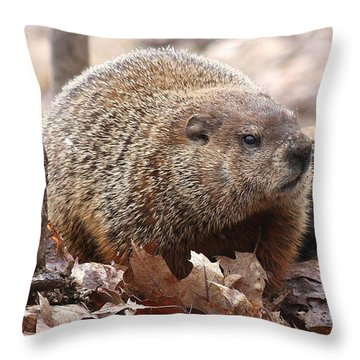 Woodchuck Watching Throw Pillow