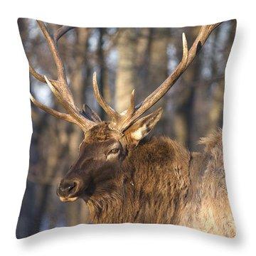 Woodland Elk Throw Pillow