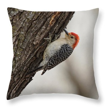 Woodpecker Throw Pillow by Alan Hutchins