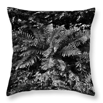 Wood's Ferns  Throw Pillow by Betty  Pauwels