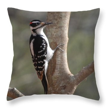 Throw Pillow featuring the photograph Woody by Mim White