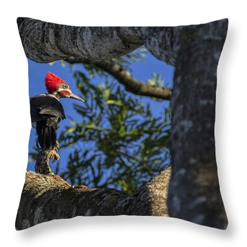 Woody Woodpecker Throw Pillow by David Gleeson