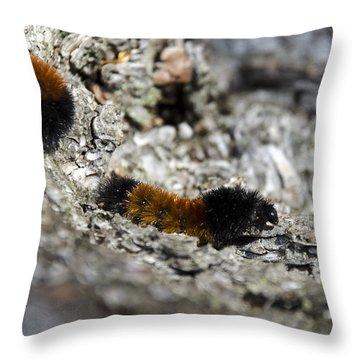 Woolly Bear Caterpillar Throw Pillow by Christina Rollo