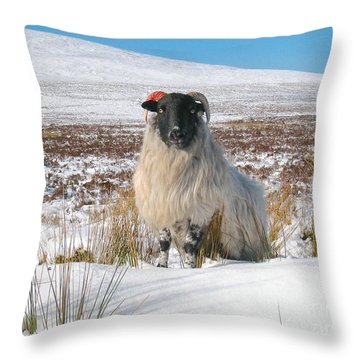 Woolly Red Throw Pillow by Suzanne Oesterling