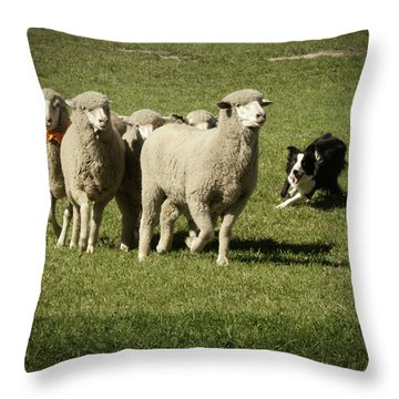 Working Australian Sheepdog Throw Pillow by Daniel Hebard