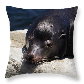 Wounded Sea Lion Resting Throw Pillow by Susan Wiedmann
