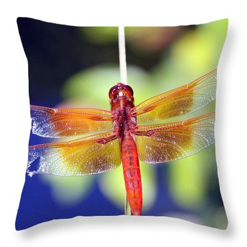Wounded Warrior Throw Pillow
