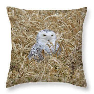 Throw Pillow featuring the photograph Wv Snowy by Randy Bodkins