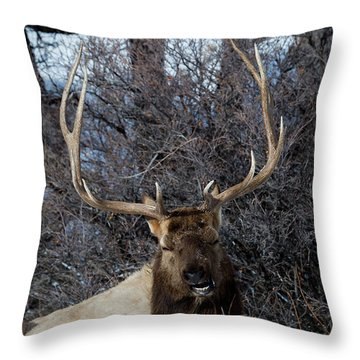 Wyoming Elk Throw Pillow