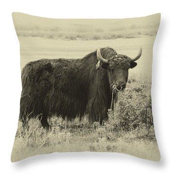 Yaks...the Official Animal Of Tibet Throw Pillow