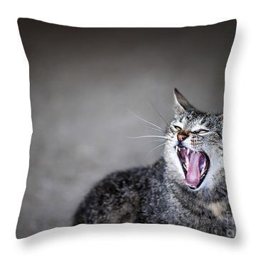 Yawning Cat Throw Pillow by Elena Elisseeva
