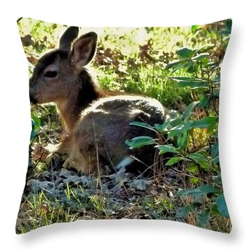 Yearling Doe Throw Pillow