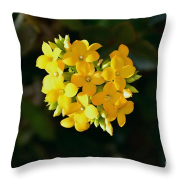 Throw Pillow featuring the photograph Yellow Allegria  by Ramona Matei