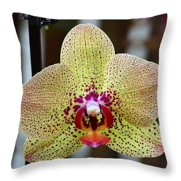 Yellow And Maroon Orchid Throw Pillow