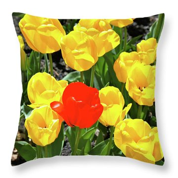 Yellow And One Red Tulip Throw Pillow by Ed  Riche
