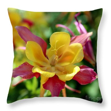 Yellow And Pink Columbineculumbine Throw Pillow
