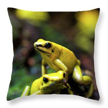 Dart Frogs Throw Pillows