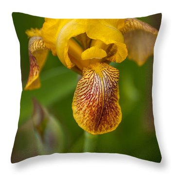Yellow Bearded Iris Throw Pillow