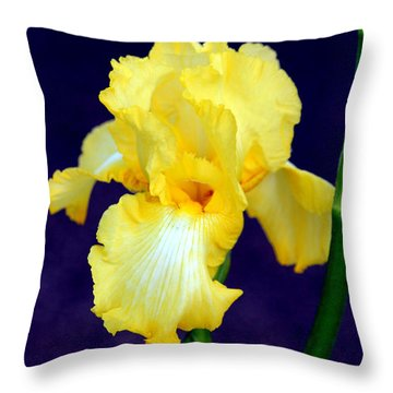 Yellow Bearded Iris Throw Pillow by Kathy  White