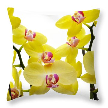 Yellow Beauties Throw Pillow