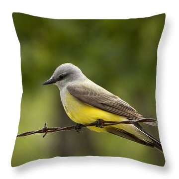 Yellow-bellied Fence-sitter Throw Pillow