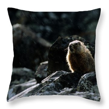 Yellow-bellied Marmot In Rain Throw Pillow