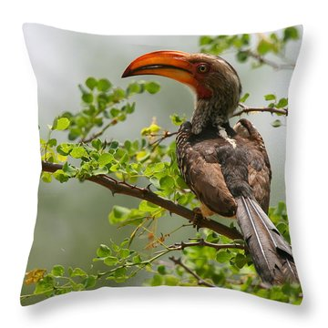 Yellow-billed Hornbill Throw Pillow