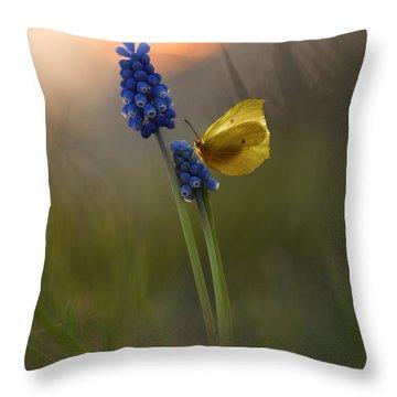 Yellow Butterfly On Grape Hyacinths Throw Pillow by Jaroslaw Blaminsky